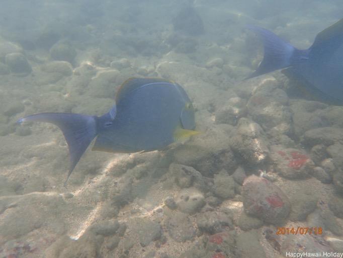ハナウマ湾での水中写真1